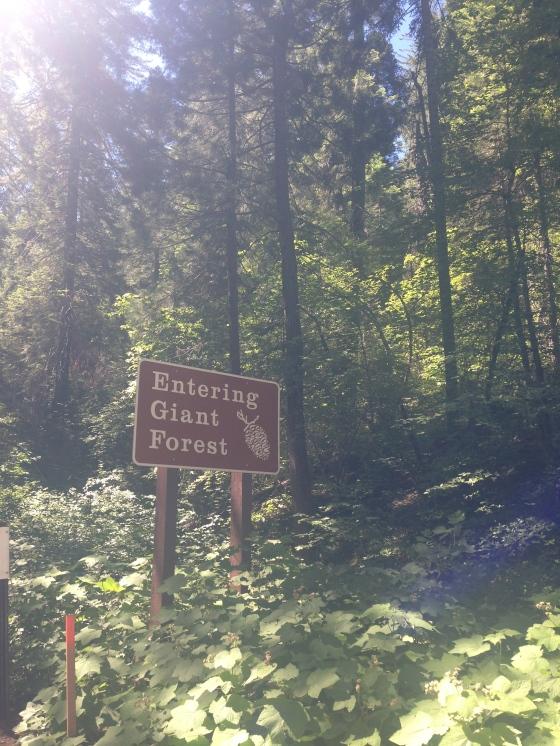 Entrando na Floresta das Árvores Gigantes