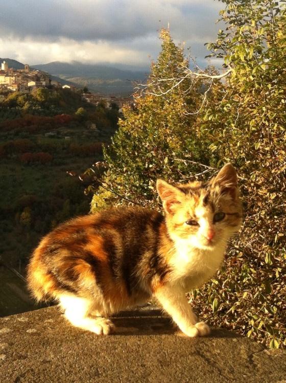 This kitten was enjoying the sunny day… Esse gatinho estava aproveitando do dia ensolarado...