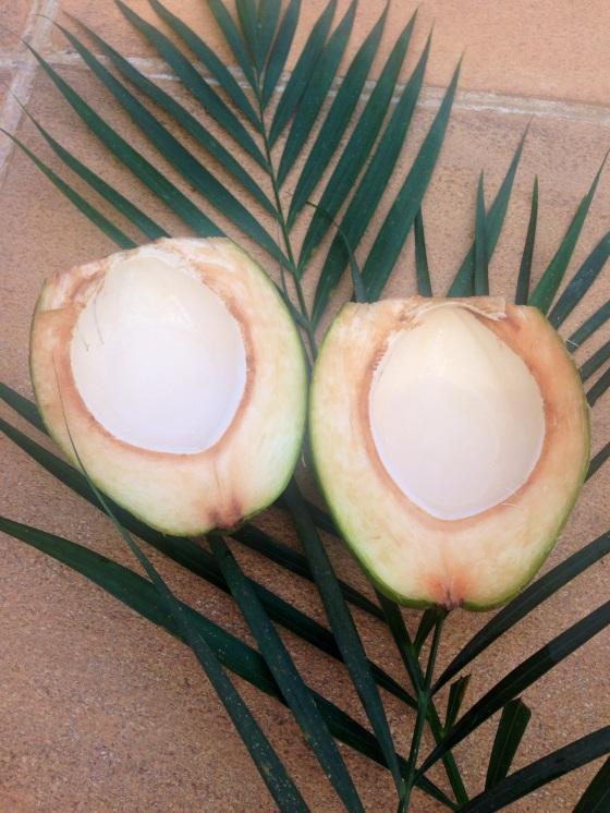 Fresh coconut water inside ! Água de côco fresquinha !