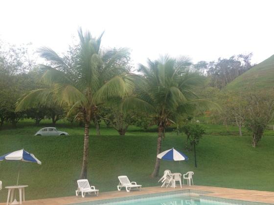 Some of the coconut trees in our garden Alguns dos coqueiros do nosso jardim