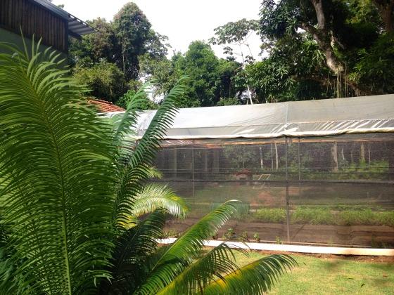 The green house for fresh vegetables. A estufa para tudo fresquinho e biológico...